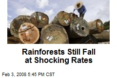 Rainforests Still Fall at Shocking Rates