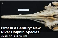 New River Dolphin Species Is First for a Century