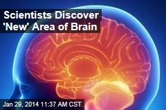 Scientists Discover 'New' Area of Brain