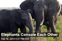 Elephants Console Each Other