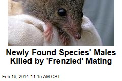 Newly found species' males killed by 'frenzied' mating