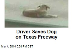 Driver Saves Dog on Texas Freeway