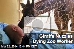 Giraffe Nuzzles Dying Zoo Worker