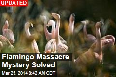 Flamingo Massacre Mystifies Zoo