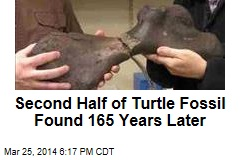 Second Half of Turtle Fossil Found 165 Years Later
