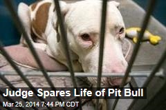 Judge Spares Life of Pit Bull