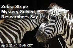 Zebra Stripe Mystery Solved, Researchers Say