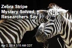 Zebra Stripe Mystery Solved, Researchers Say