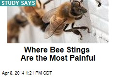 Where Bee Stings Are the Most Painful