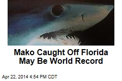 Mako Caught Off Florida May Be World Record