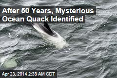 After 50 Years, Mysterious Ocean Quack Identified