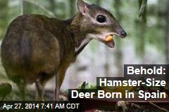 Behold: Hamster-Size Deer Born in Spain