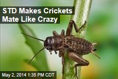STD Makes Crickets Have More Sex