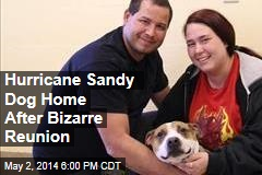 Hurricane Sandy Dog Home After Bizarre Reunion
