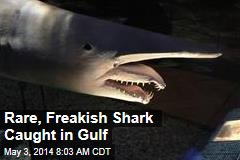 Rare, Freakish Shark Caught in Gulf