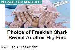 Scientists Make New Find in Photos of Freakish Shark
