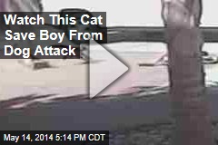 Watch This Cat Save a Boy From Dog Attack
