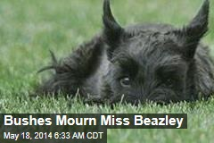 Bushes Mourn Miss Beazley