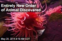 Entirely New Order of Animal Discovered