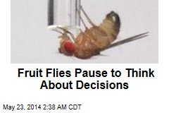 Humans, Fruit Flies Share Decision-Making Gene