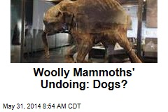 Woolly Mammoths' Undoing: Dogs?