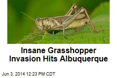 Albuquerque Dealing With Insane Grasshopper Invasion