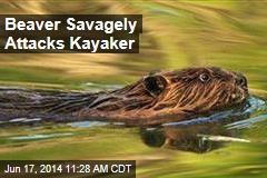 Beaver Savagely Attacks Kayaker