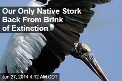 Wood Storks Back From Brink of Extinction