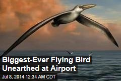 Biggest-Ever Flying Bird Unearthed at Airport