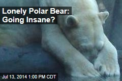 Lonely Polar Bear: Going Insane?