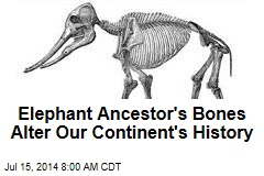Elephant Ancestor's Bones Alter Our Continent's History