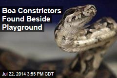 Boa Constrictors Found Beside Playground