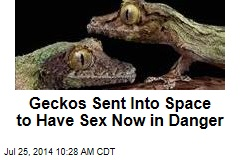 Geckos Sent Into Space to Have Sex Now in Danger