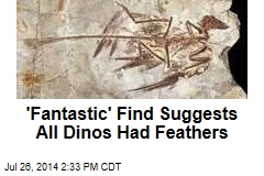 'Fantastic' Find Suggests All Dinos Had Feathers