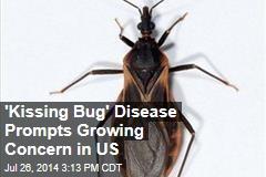'Kissing Bug' Disease Prompts Growing Concern in US
