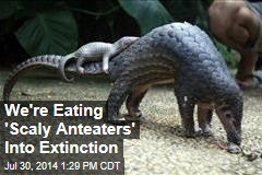 We're Eating 'Scaly Anteaters' Into Extinction