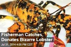 Fisherman Catches, Donates Bizarre Lobster