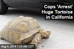 Cops 'Arrest' Huge Tortoise in California