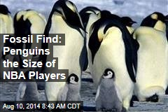 Fossil Find: Penguins the Size of NBA Players