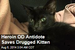 Heroin OD Antidote Saves Drugged Kitten