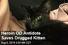 Heroin OD Antidote Saves Drugged Kitten