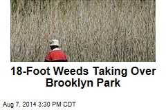 18-Foot Weeds Taking Over Brooklyn Park