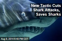 Tactic Curbs Shark Attacks to Nearly Nil