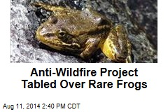 Tree-Thinning Project Tabled Over Rare Frogs