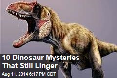 10 Dinosaur Mysteries That Still Linger