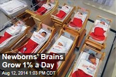 Newborn's Brains Grow 1% a Day