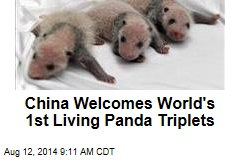 China Welcomes World's 1st Living Panda Triplets