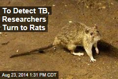To Detect TB, Researchers Turn to Rats