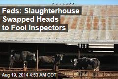 Feds: Slaughterhouse Swapped Heads to Fool Inspectors