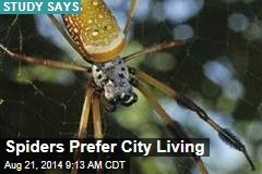 Spiders Prefer City Living